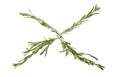 Branch of rosemary lie by four rays Stock Photo