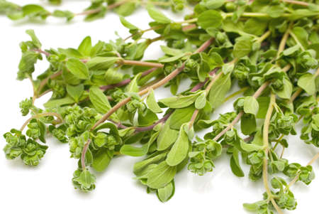 Bunch thyme on white background