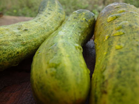 cucumbers: fresh cucumbers Stock Photo