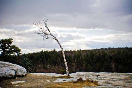 enkele boom