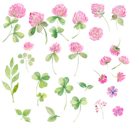 Watercolor set of flowers pink clover . Hand drawing for cards, invitations, decor Stok Fotoğraf