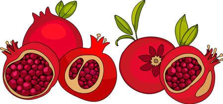 Red pomegranate. Cutting pomegranate.  ripe pomegranate fruit whith leaf vector illustration. Isolated white background