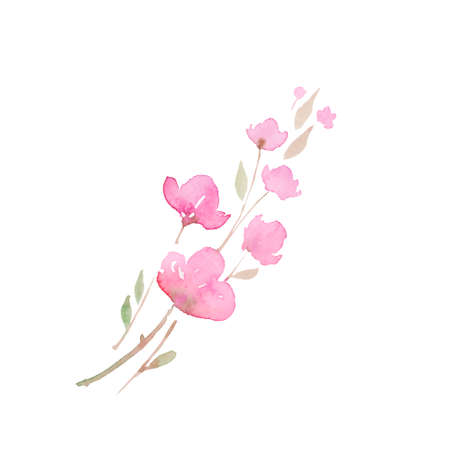 blooming cherry, sakura, , watercolor illustration.  branch with pink flowers, watercolor illustration. Hand drawing for the design of invitations, cards, decorations