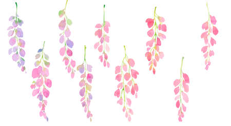 pink and purple wisteria, branches and flowers, watercolor illustration. design for print, greeting card, postcard and invitation, fashion fabric.
