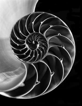 Close up of nautilus shell Stock Photo