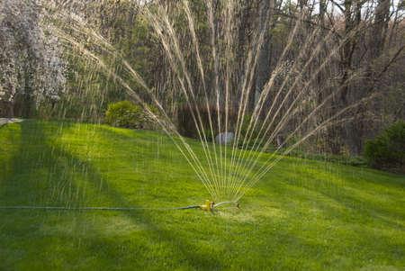 medium shot: Medium shot of sprinkler