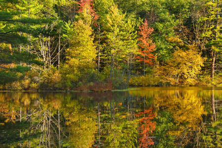 fall tree reflection photo