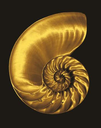 shell: Gold chambered nautilus on black
