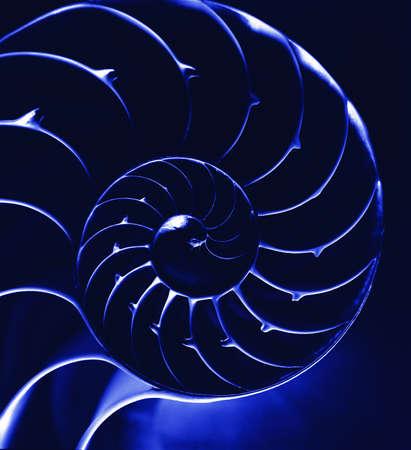 fossil: Nautilus shell