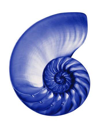 Nautilus half shell in blue