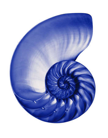 Nautilus half shell in blue
