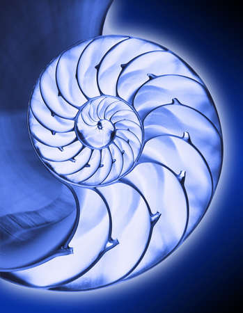 Blue inside half of chambered nautilus shell with clipping path