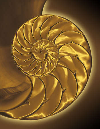 chambered: Gold inside half of chambered nautilus shell with clipping path Stock Photo