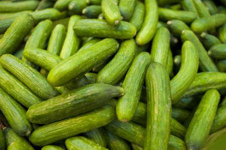 english cucumber: cucumber, english, firm, green, market, ready, ripe, sale