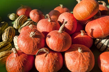 Pumpkins and gourds bunched together on a Vermont farm stand Stock Photo - 10863941
