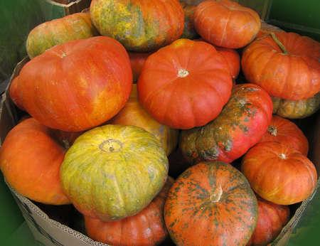 bunched: Zucche raggruppato insieme su un supporto fattoria del Vermont Archivio Fotografico