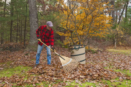 work: Senior raking autumn leaves in his backyard