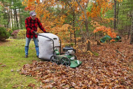 Senior vacuuming autumn leaves in his backyard photo