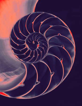 Nautilus shell interior on black
