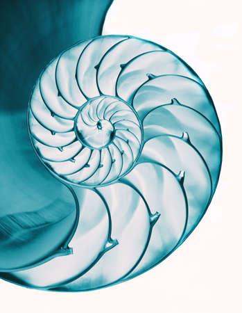 Nautilus shell interior on white