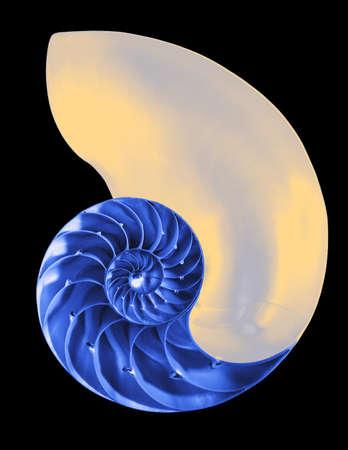 Nautilus shell exterior on black, isolated  photo