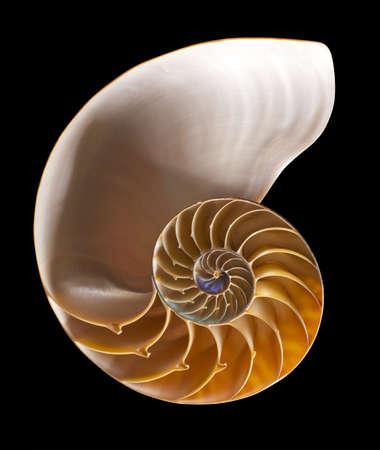 Nautilus Shell auf schwarzem Interieur, isoliert