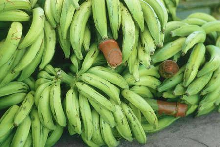 Green bananas sitting on a dock in Honduras photo