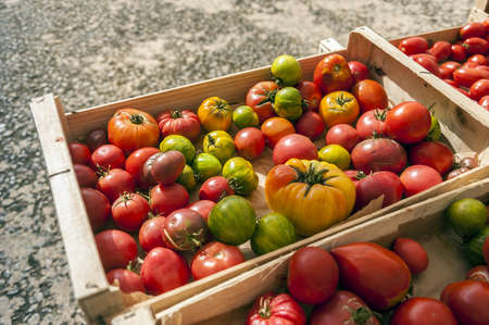 full grown: Wooden box full of organically grown tomatoes Stock Photo