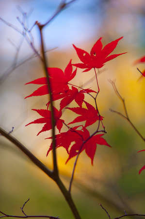 Fall leaves for an autumn background  Stock Photo - 16327189