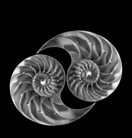 Nautilus shells back to back, isolated