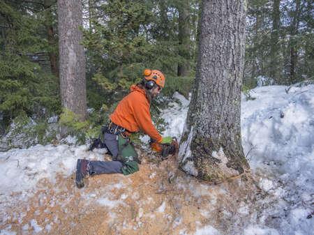 boom kappen: Boom te snijden door een houthakker