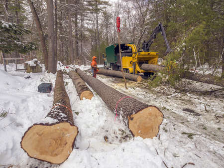 Tree cutting and chipping on residential road photo