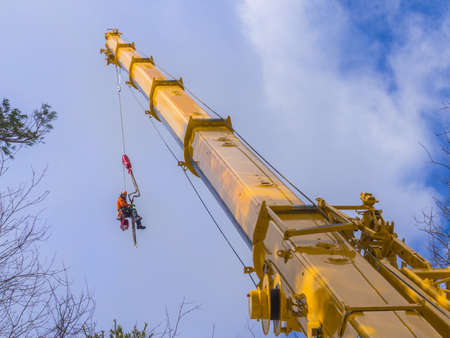 trees services: Tree pruning by a lumberjack at the end of a mega telescoping crane