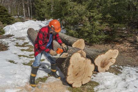 chainsaw: Lumberjack cutting trees