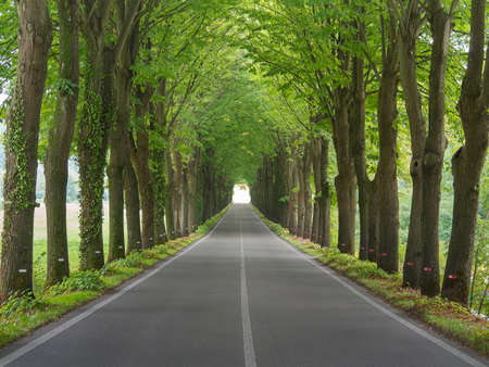 Tree lined country road  photo