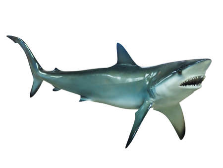 aggressiveness: Stuffed great white shark, isolated Stock Photo