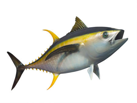 atún: El atún aleta amarilla rellena en movimiento rápido, aislado
