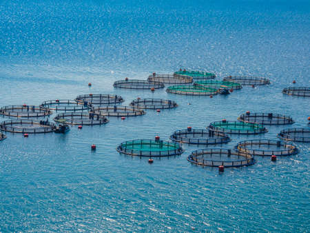 farm structures: Fish farm
