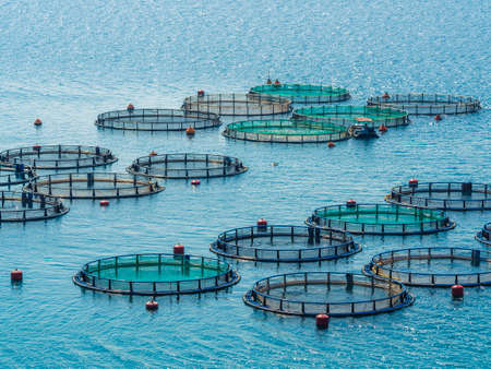 aquaculture: Fish farm