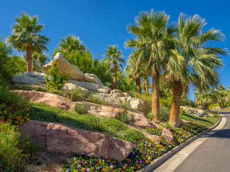 Manicured desert landscaping including palm trees, plants, flowers, Фото со стока