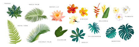 Set of realistic tropical leaves and flowers with names isolated on white background. Monstera, heliconia, hibiscus, areca palm, coconut palm, water lily, papaya, fern. Artistic botanical illustration  イラスト・ベクター素材