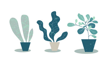Home plants in pots. Simple flat illustration of potted plants. Modern design with monstera leaves and tropical plants. Artistic fashion print illustration