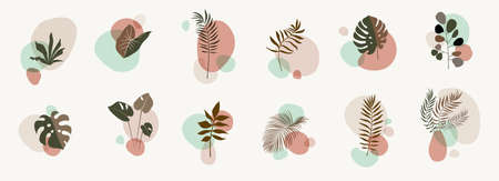 Abstract botanical compositions. Boho story highlites template. Fluid organic shapes, neutral colors. Bohemian exotic leaves. Mid Century Modern foliage design. Twigs illustration Ilustracja