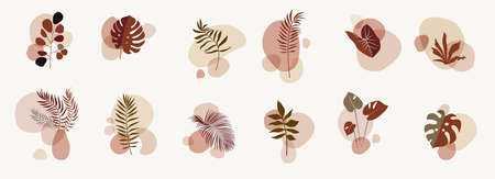 Abstract botanical compositions. Story highlights template. Earthy colors natural organic fluid shapes. Social media bohemian jungle exotic leaves design. Boho style foliage. Twigs illustration