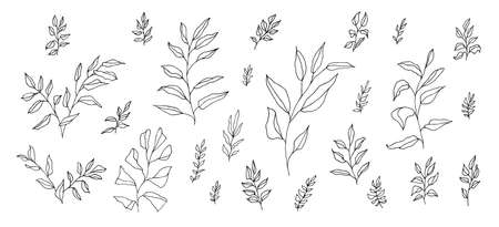 Boho aesthetic botanical set of black linear hand-drawn twigs isolated on white. Bohemian style artistic branches for wedding invitation. Vintage elegant doodle herb drawing. Foliage decoration
