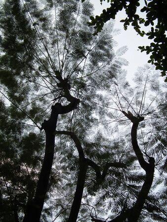 shadowed: shadowed tree 002