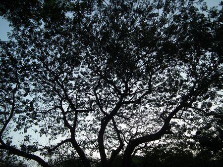shadowed: shadowed tree 006