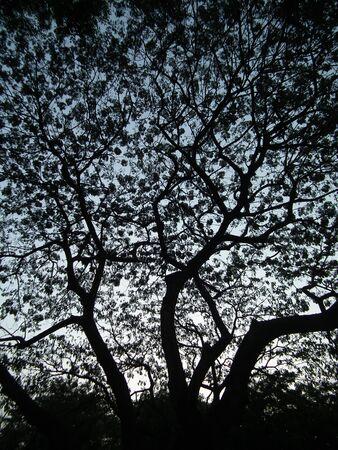 shadowed: shadowed tree 007