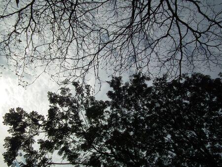 shadowed: shadowed tree 012