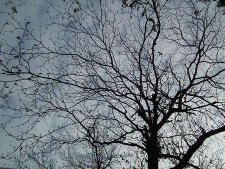 shadowed: shadowed tree 014